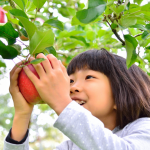 kid picking apple from tree